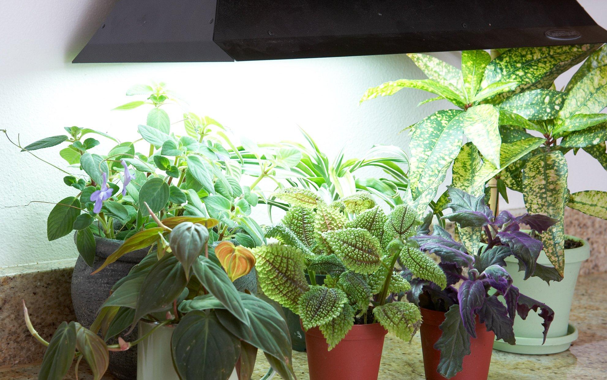 Grow Lights Singapore SingaporeHomeFurniture